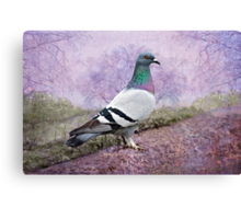 Pigeon in the Park Canvas Print