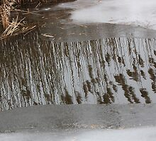 Marsh Grass Reflections with Ice 17 by marybedy