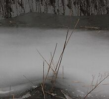 Marsh Grass in Ice by marybedy