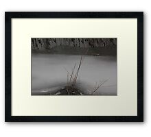 Marsh Grass in Ice Framed Print
