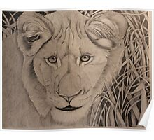 Baby Lion Poster