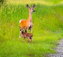 Mother  by RevelstokeImage