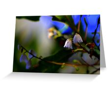 North Head Manly -  Nature's Bells Greeting Card
