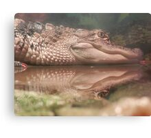 Baby Alligator Reflecting... Canvas Print