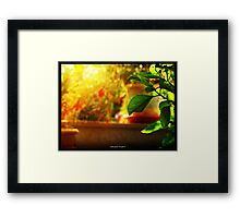 colors of sunny days Framed Print