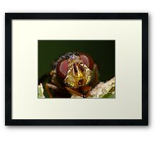 Happy Australia Day - Lets Party Framed Print