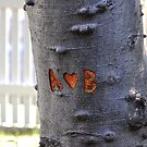 Carved tree  by for the love photography