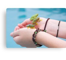 3 frogs Canvas Print