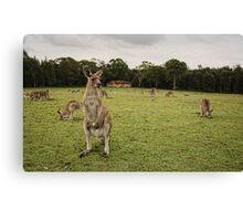 Australia Day Aussie Style Canvas Print