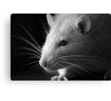 Black and White Rat Canvas Print