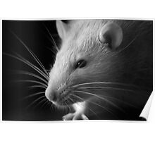 Black and White Rat Poster