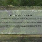 North Head Manly - The Lone Pine by miroslava