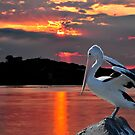 Pelican Sunset by bazcelt