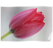 @ @ @ I love tulips .Favorites: 5 Views: 604 . Thx!  ###  Featured by the in The Pink Group and Superbly Visual  ### . Amen. Poster