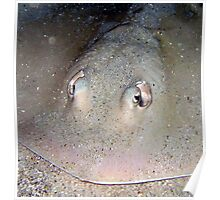 Sting Ray Poster