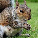 The Squirrel by Roxanne du Preez