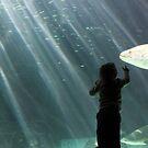 Wow, a fish by Roxanne du Preez