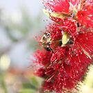 Worker Bee by Roxanne du Preez