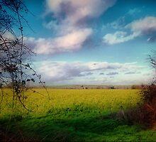 Dorset Life by naturelover