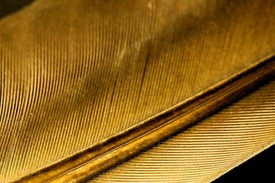 From the Golden Goose by Glenn Cecero