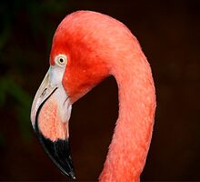 Pink Flamingo by Larry Trupp