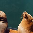 Seal Buddies by Imagery