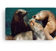Seal Fight Canvas Print