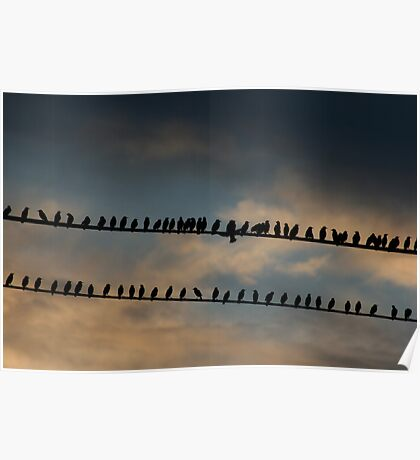 Birds on a 2 wires, Laughing at golden hour! Poster