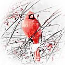 Winter Male Cardinal by Marcia Rubin