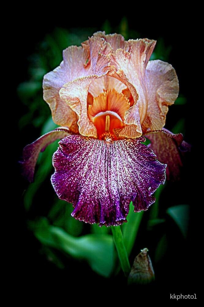 Vibrant Iris Flower by kkphoto1