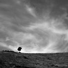 Tree on a windy hill, Corsica France by M. van Oostrum