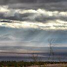 Nevada by Jamie Lee