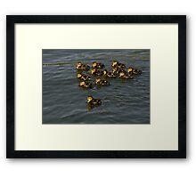 12 Ducklings Framed Print