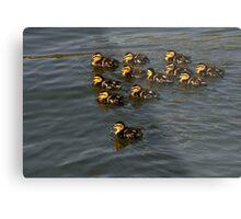 12 Ducklings Metal Print