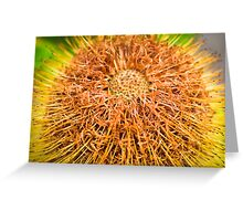 Aussie Natives 4 Greeting Card
