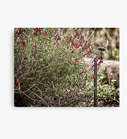 Water Hydrant Canvas Print