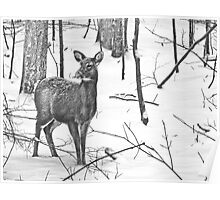 Snow Covered Doe Poster