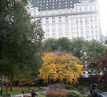 Central Park, Fall Colors, Plaza Hotel by lenspiro