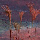 Dreamy Grass~ by virginian