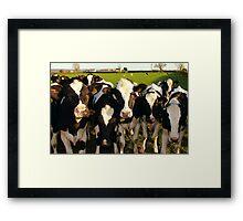 Cheeky Cows Framed Print