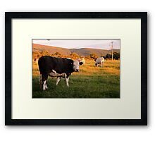 Carlton Cows Framed Print