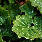 Rain drops by Ross Buchanan