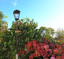English Country Garden by Ross Buchanan