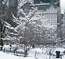 Central Park in Snow, Plaza Hotel by lenspiro
