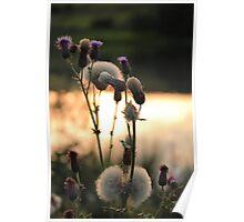 Lakeside Wildflower Poster