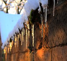 Icicles by Ross Buchanan