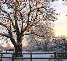 Winter Sunrise by Ross Buchanan