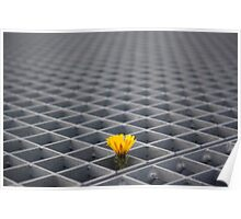 Lonely yellow flower among metal grid Poster