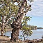 The Murray River, Mildura by Leanne Nelson