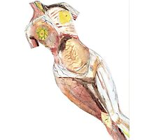 """Anatomical Nude Modelled on """"In Utero"""" Album Photographic Print"""